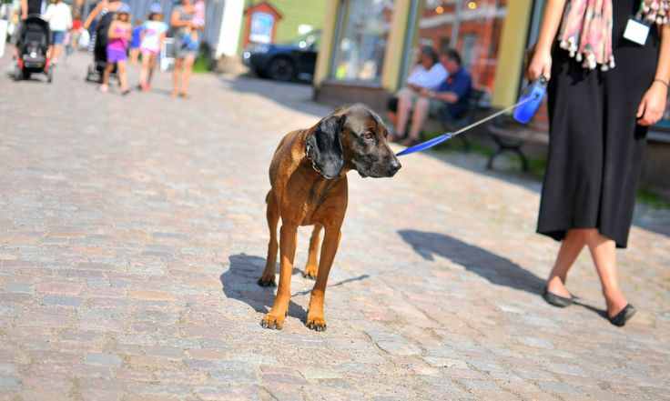 Explore the Old Porvoo with four legs. Many summer terraces are dog friendly and will even give a cup of water for your little hairy friend. Shop owners are also welcoming! www.visitporvoo.fi
