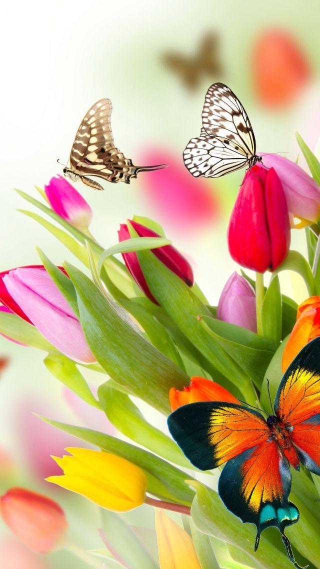 Butterfly Wallpaper Hd Nature Flower Mywallpapers Site Butterfly Wallpaper Flowers Dark Flowers