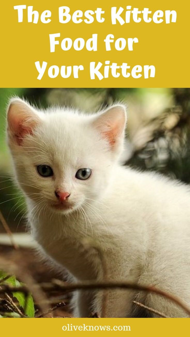 Best Kitten Food For Your Little Feline 2020 Edition Oliveknows Kitten Food Best Cat Food Kitten Health