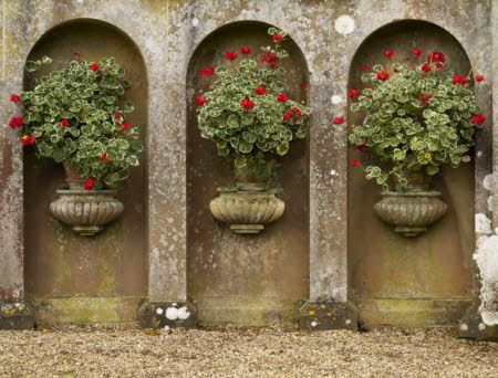 Geraniums in stone urns as part of a feature in the garden at Belton House, Lincolnshire