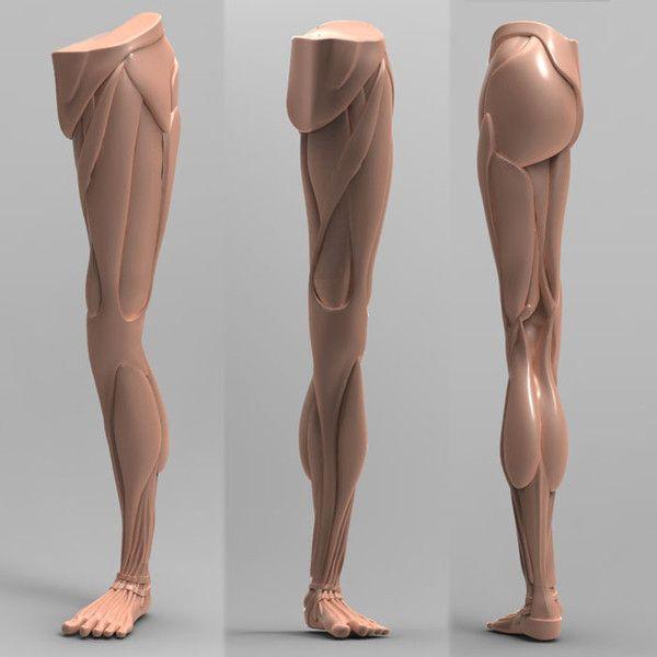 human leg anatomy combo 3d model - Human Leg Anatomy [Combo Pack]... by vertex_monkey