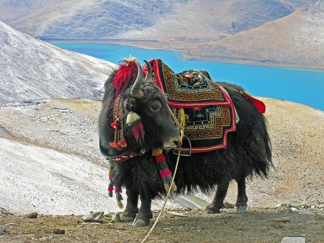 Leh Ladakh:
