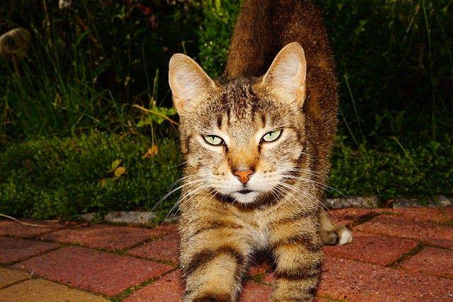 enjoymarket: Πεινασμένες γάτες....