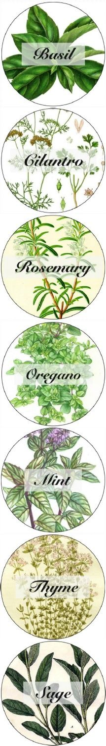 Herb Labels free printable that fits small mouth mason jars