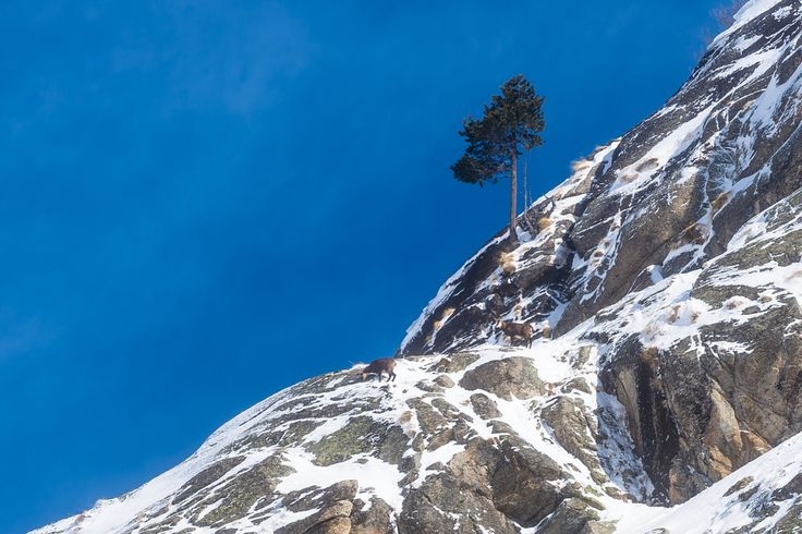 GRAN PARADISO NATIONAL PARK , #ITALY , THE ALPS - MORE ON WWW.PIXCUBE.IT