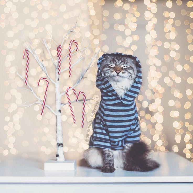 Con esta bonita imagen de @pitterpatterfurryfeet os deseamos una Feliz Navidad ❄️   Que tengáis unas felices fiestas y disfrutad un montón de estos días   ¡Feliz Navidad hunteers!    #felizdomingo #happysunday #feliznavidad #merrychristmas #nochebuena #christmaseve #navidad #christmas #xmas #felicidad #happiness #gato #cat #cute #love #family #hunteet #hunteers #reto #foto #premio #pic #nicepic