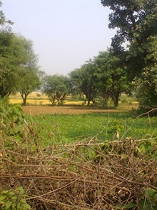 Agricultural Land For Sale in west bengal   17 Acre   51868446 - Nanu Bhai Property