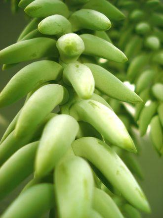 Remek kálium, magnézium és vas forrás a zöldbanán liszt.  http://glutenmentes-paleoliszt.hu/