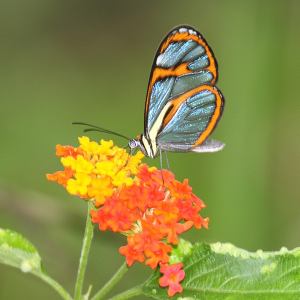 The Beauty Of Butterflies 2018 The Most Exotic And Colourful Butterflies In Twelve Intriguing 1