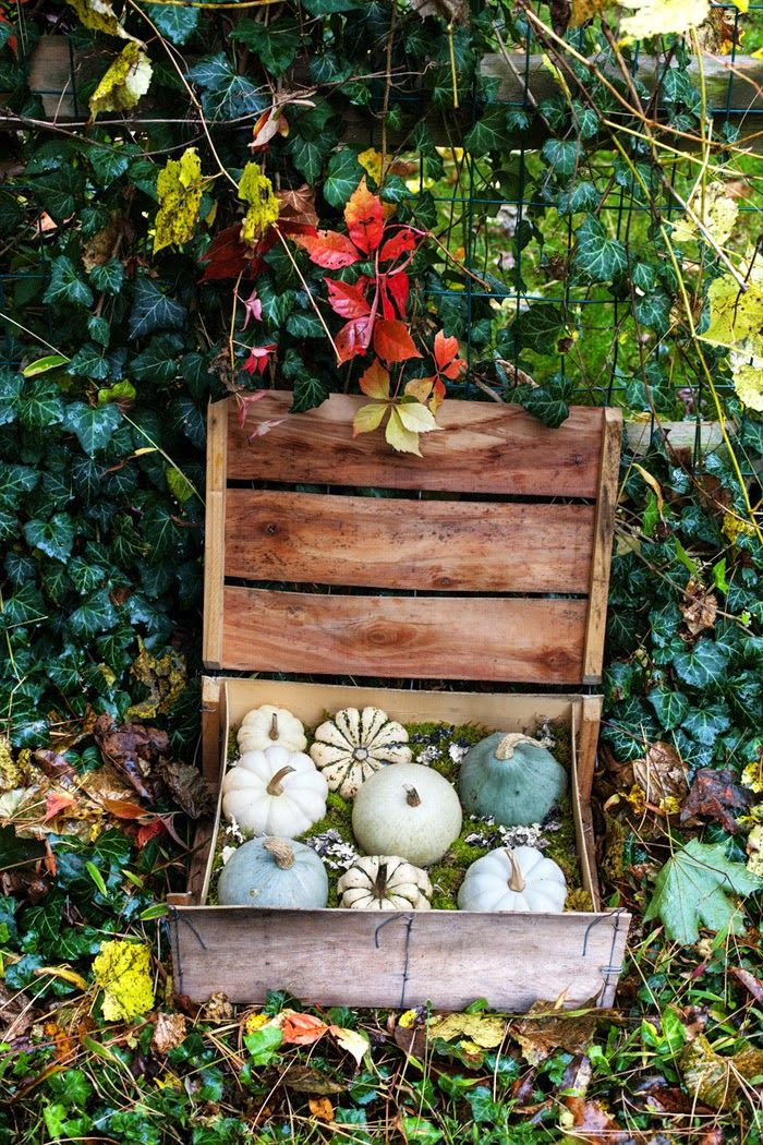 Some rustic pumpkin display inspiration (DIY style) Click through for how-to. #pumpkins #fall #halloween