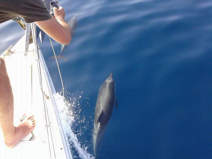 Ταξιδεύοντας από Σιθωνία στην Κασσάνδρα μαζί με τα δελφίνια της Χαλκιδικής