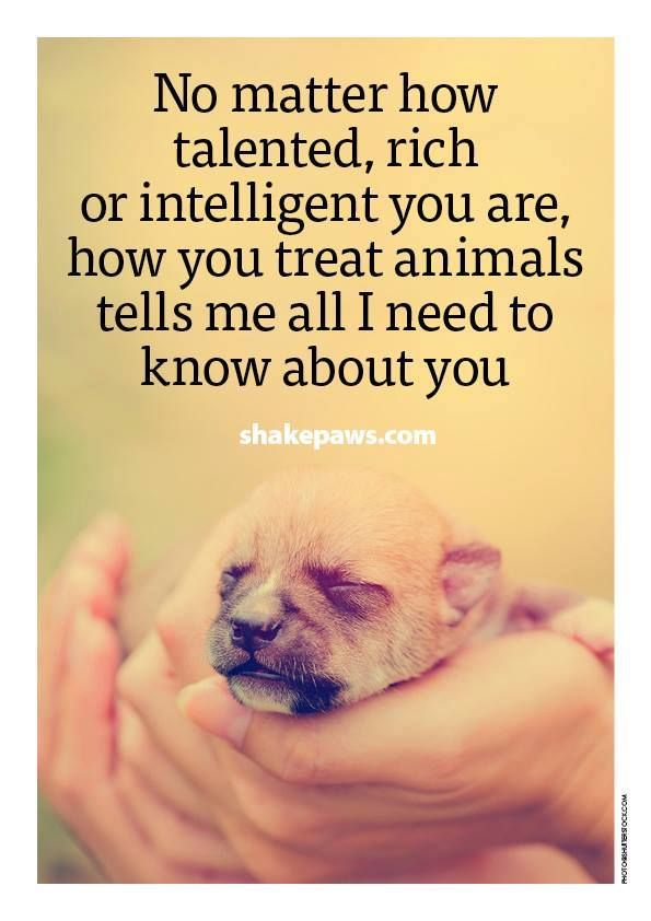 Because Kindness Isnt Limited Just For A Few Dogs Mans Best