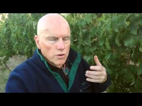 Grosset Springvale 2016 Picking   Grosset Wines - Clare Valley, South Australia