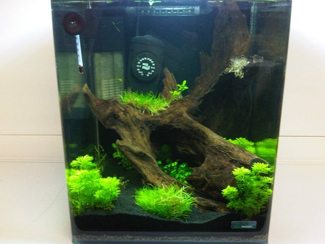 How to Setup A Nano Aquarium with live plants- Freshwater Guides - Guides