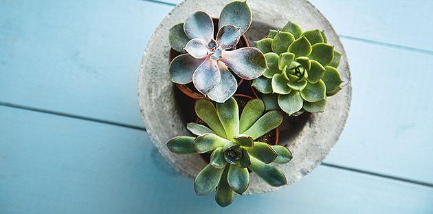 Les plantes succulentes et la déco - Décormag