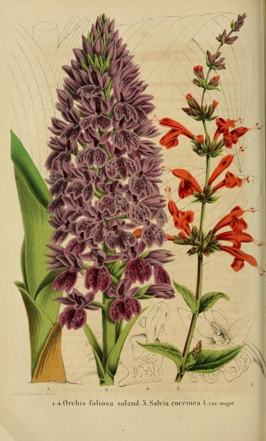 t.9 (1858-1859) - Belgique horticole. - Biodiversity Heritage Library