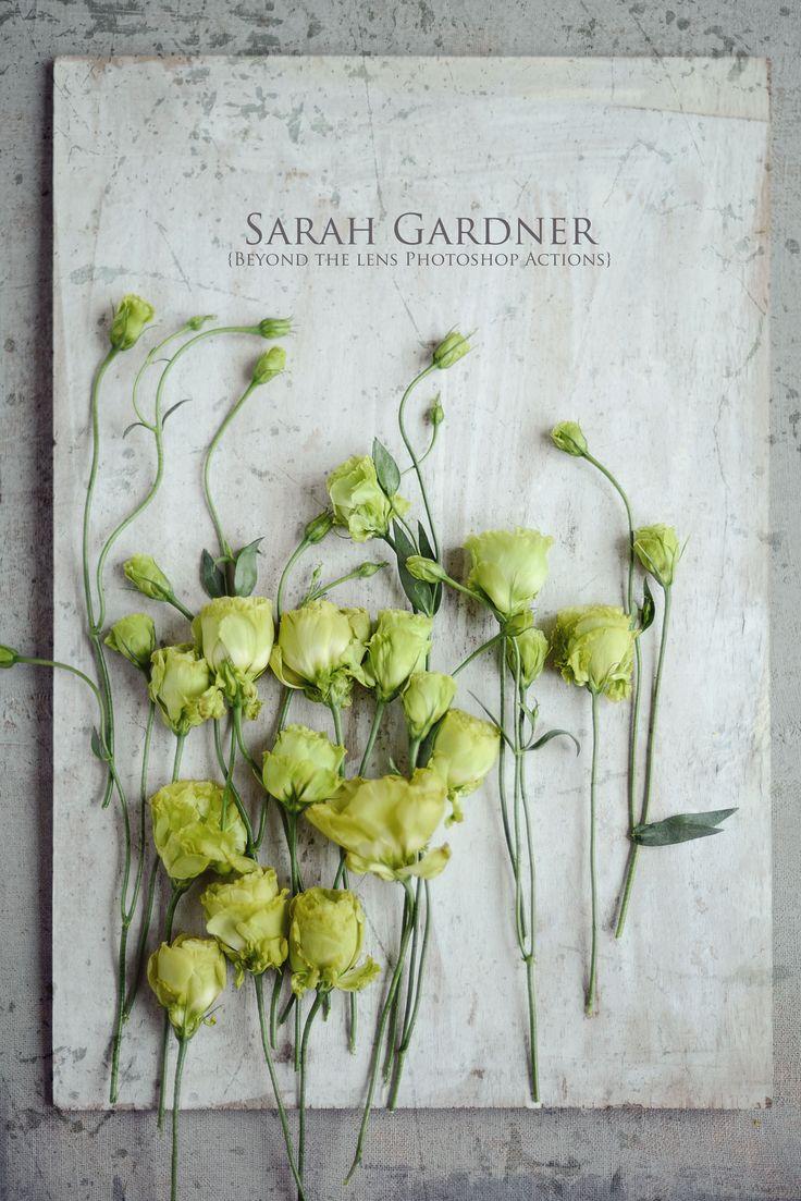 Photography by Sarah Gardner http://sarahgardnerphotography.blogspot.co.uk/