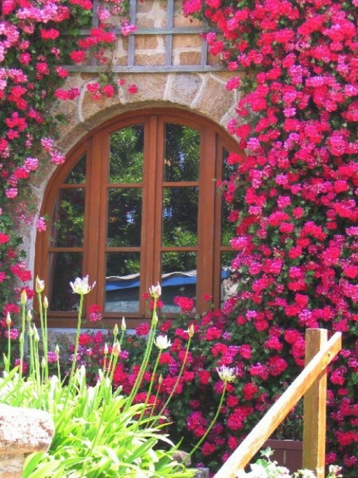Climbing RosesBeautiful Flower, Pink Roses, Rose Flower, Colors, Climbing Roses, Gardens, Weights Loss Tips, Windows, Weightloss