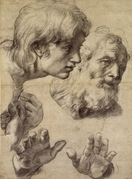 Raphael: Studies of the heads of two apostles and of their hands, black chalk touched with white on greyish paper, 499 x 364 mm
