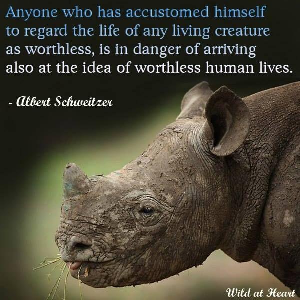 Famous Animal Rights Quotes: Albert Schweitzer Quotes Animals. QuotesGram