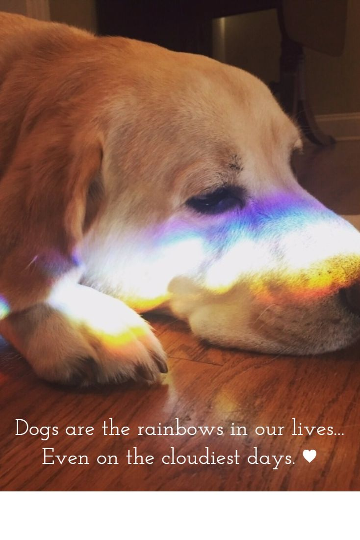 Miss you on your birthday sweet MAXX My rainbow has been gone for almost 2 months now RIP baby Dog Quotes Animal