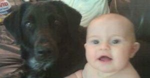 Dog Suddenly Becomes Aggressive. But When Parents Leave Home Under Surveillance, They Find Out Babysitter Is Abusive.