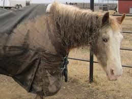 Muddy Horse & Blanket