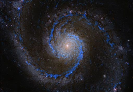 Molecular hydrogen in the Whirlpool Galaxy M51. The blueish features show the distribution of hydrogen molecules in M51, the raw material for forming new stars. Credit: PAWS team/IRAM/NASA HST/T. A. Rector (University of Alaska Anchorage)