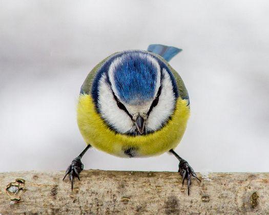 Mejores 78 imágenes de bird en Pinterest | Pajaritos, Patrones y ...
