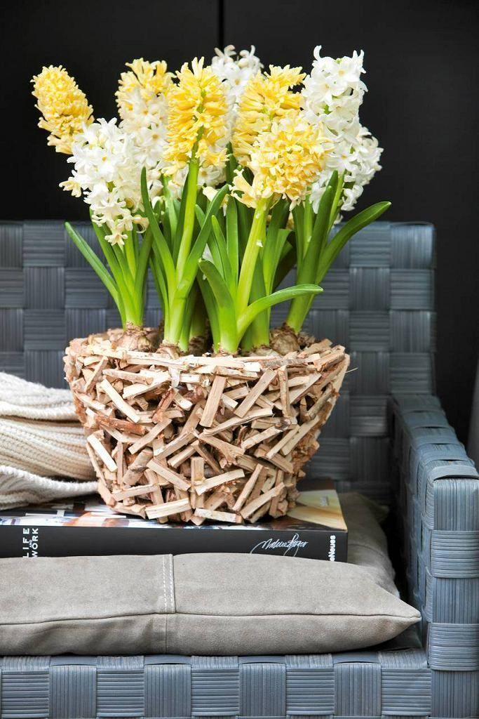 Kwiaty Cebulowe W Pomyslowych Kompozycjach Biale I Zolte Odmiany Hiacyntow Top White Plants