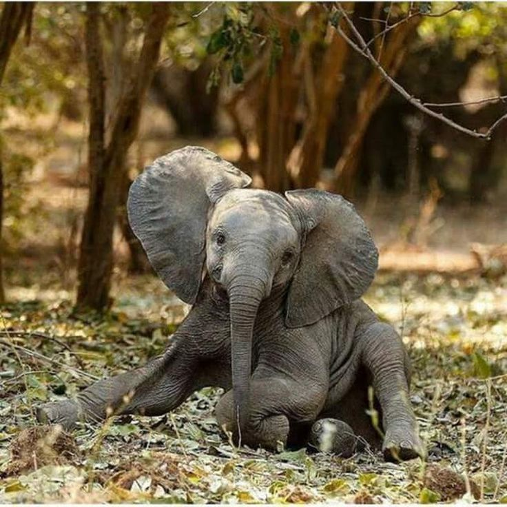 This Cute Baby Elephant Looks Like Its Posing For A ...