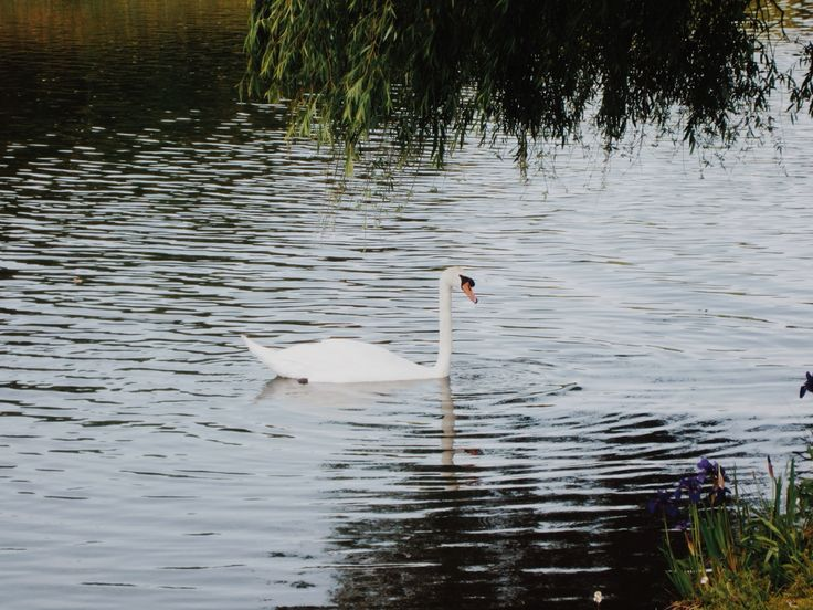 White Swan - Mito Japan