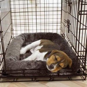 Puppy and dog crate training tips. #puppy_training #dog_training #puppy_tips