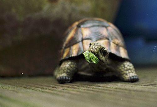 NommmBoxes Turtles, Turtles Tortoies, Ninjas Turtles, Heart Turtles, Turtlessea Turtlestortoi, Things, Awkward Turtles, Box Turtles, Animal