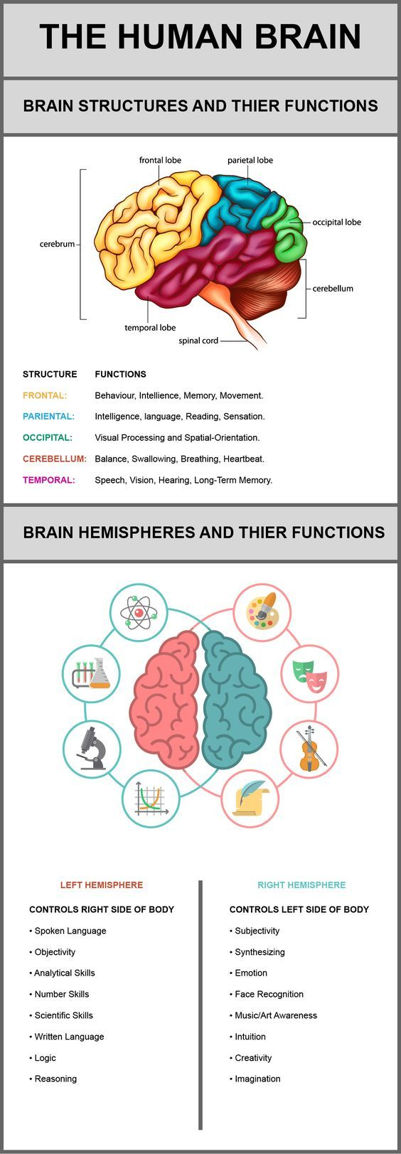 The Human Brain, Its Structures And Their Functions   Visual.ly