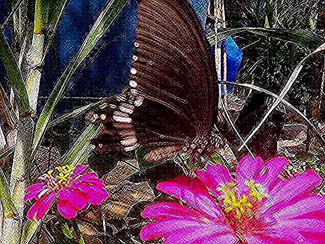 Gambar Bunga Dahlia Bergerak Koleksi Galeri Pernik Dunia Yang Berisi Gambar Pemandangan Alam Gambar Pemandangan Indah Seperti Burung Bunga Hewan In 2020 Plants Bunga