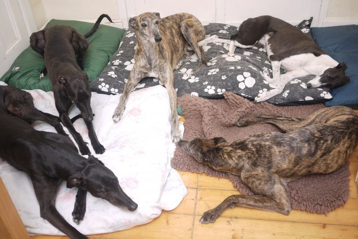 a floor full of hounds!