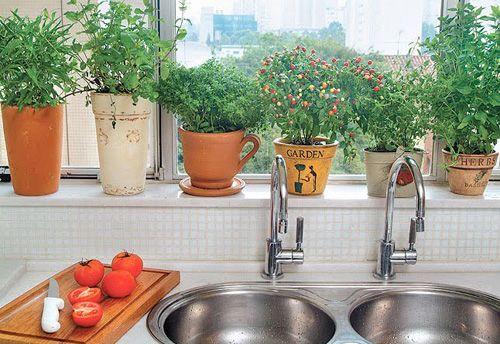 Como fazer uma horta orgânica em apartamento 1