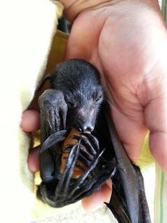 75 - just baby siting 11/11/2012 | BATs - Mega and Micro
