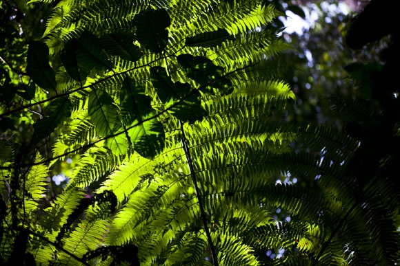 The rainforest of Sumatra is a UNESCO World Heritage Site