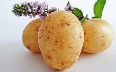 Consigli su come coltivare patate in casa o sul balcone in modo semplice. Guida pratica sulla coltivazione delle patate nel sacco, nel bidone o in vaso.