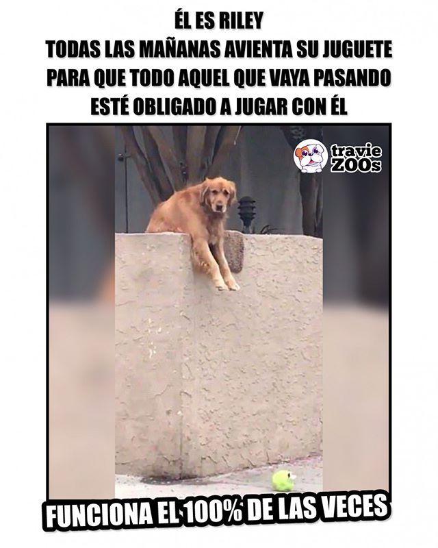 La Verdad Yo Tambien Caeria En Su Juego Instagram Animals Memes