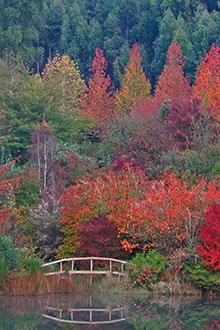 An all-season garden, Sequoia Gardens (Magoebaskloof, Limpopo)  is most spectacular in autumn when the indigenous and exotic trees explode in intense shades of red, yellow and orange.