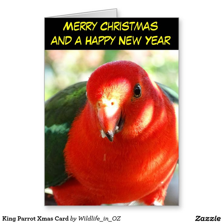 King Parrot Xmas Card - Australian Wildlife. Click on photo to view item then click on item to see how to purchase that item. #christmascard #xmascard #parrot #kingparrot #wildlife #australianwildlife #zazzle