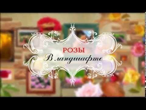 Посадка роз и организация розария. Розовое настроение. Выпуск 6