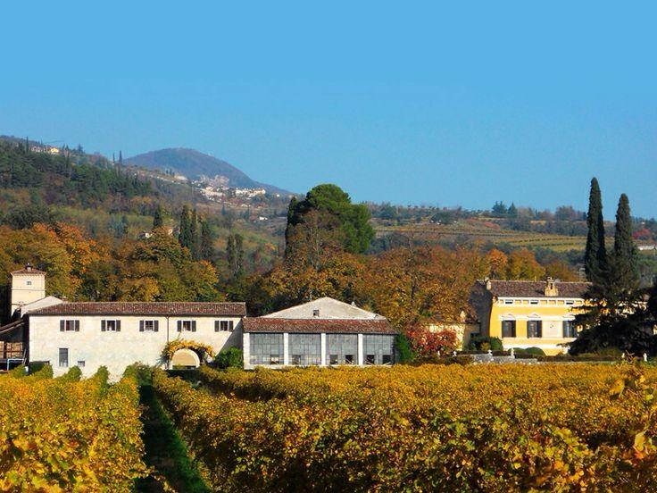 serego alighieri winery