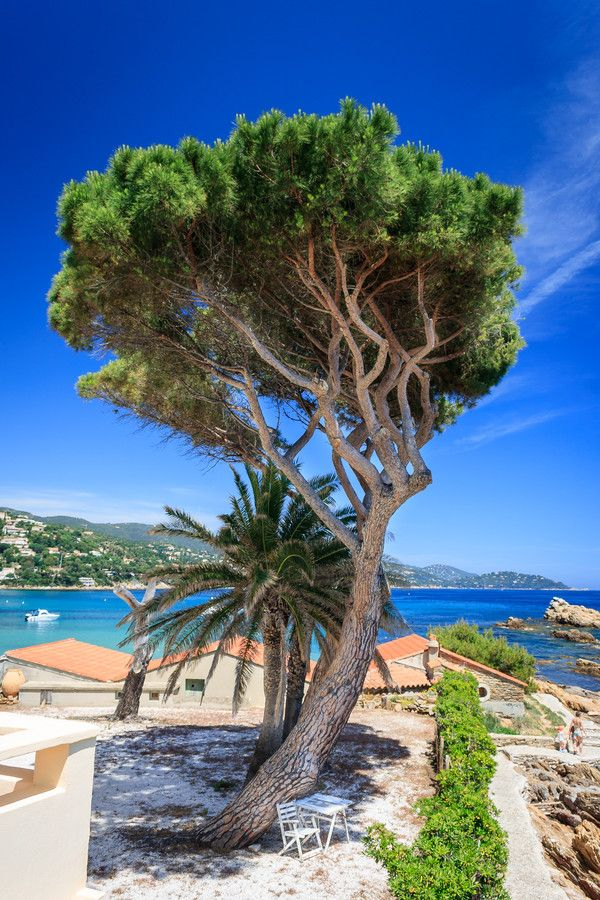 Le Lavandou, France (Can I cash out the last 20 years of my life here?)