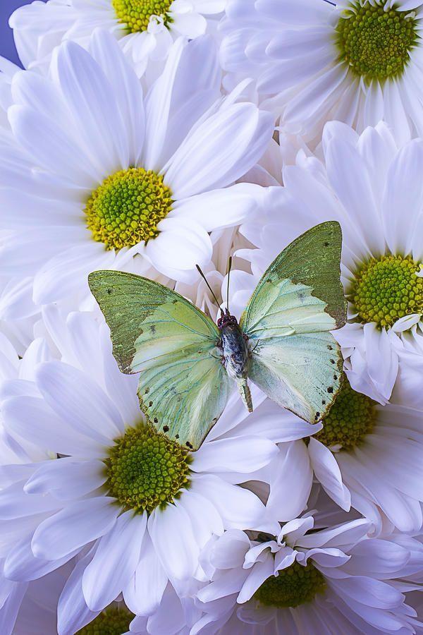 """""""Green Butterfly"""""""