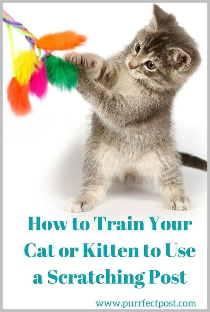 6 Tips For Preparing To Bring Home Your New Kitten Life Cats In 2020 Kitten Cat Care Cats