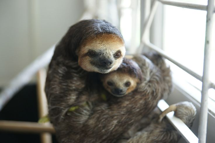 Suriname is in an area which includes around 25% of the world's natural forest, and produces up to 15% of the world's fresh water. | Meet The Woman Who Lives With 200 Sloths